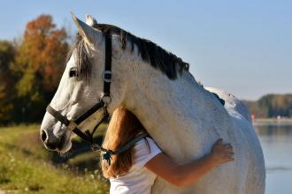 Alavis pro zdravé klouby koní, psů a koček
