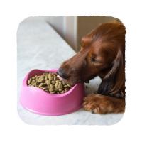 BECO Bowl EKO Miska pro psa natural L