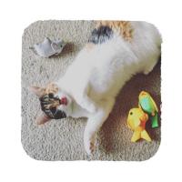 BECO Family Andulka Bertie hračka pro kočky s šantou kočičí
