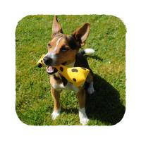 BECO Family Žirafa George hračka pro psy M