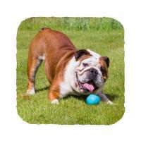 BECO Ball EKO míček pro psy - modrý L