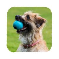 BECO Ball EKO míček pro psy - růžový M