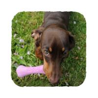 BECO Bone EKO kost pro psy - zelená M