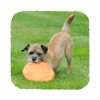 BECO Flyer EKO létající talíř pro psy oranžový