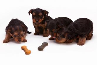 Dobroty za odměnu pro naše mazlíky - vybíráme psí pamlsky