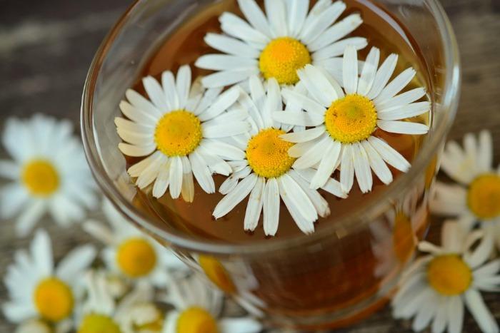 Heřmánek - sluníčko mezi léčivými bylinami