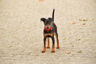 Megí – spokojený pes