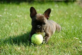 Měkoučké, střapaté, hravé - vybíráme hračky pro psy!