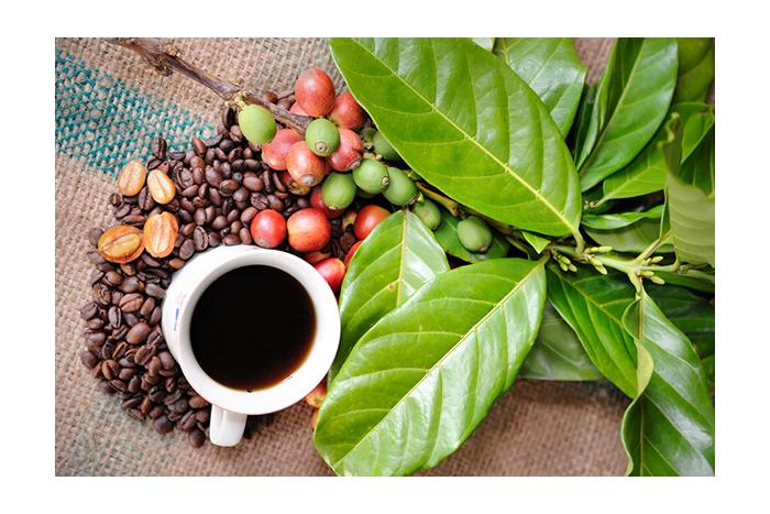 Nejen pro milovníky kávy: jaké účinky má na nás kofein v kosmetice