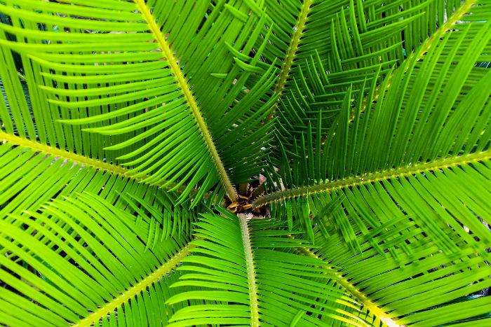 Palmový olej a jeho účinky - co na to naši dodavatelé?