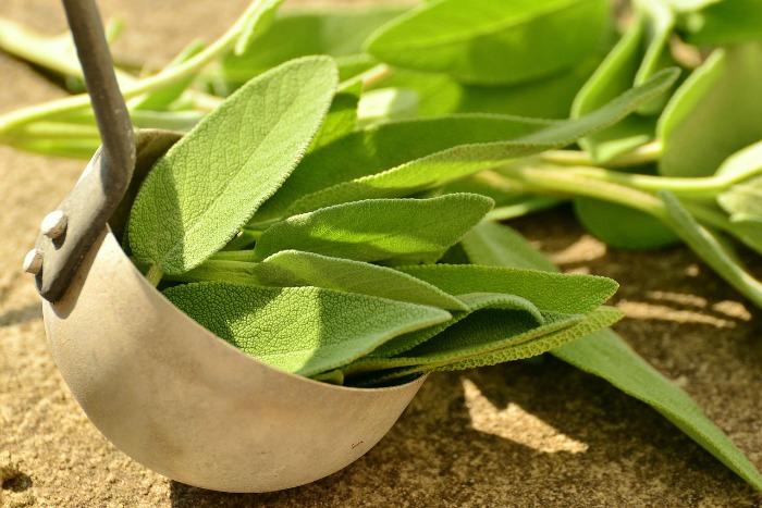 Šalvěj, bylinka i koření v jednom