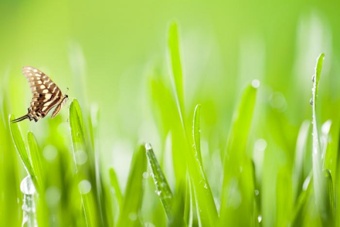 Zelený ječmen. Načerpejte jeho energii